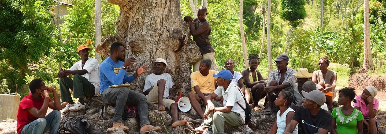 Réunion de travail autour d'un arbre